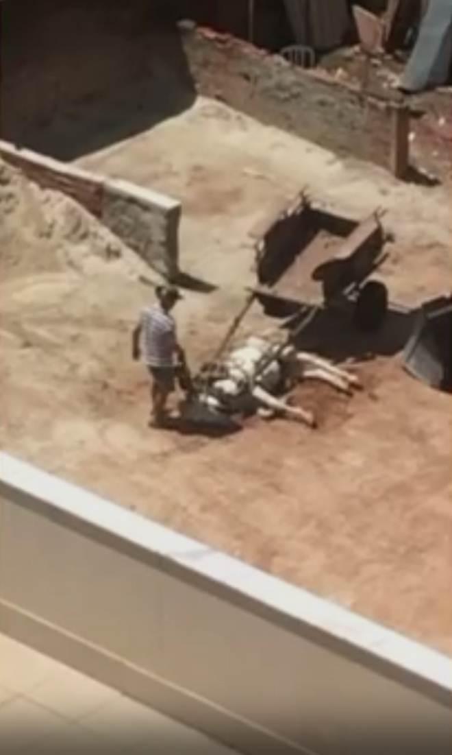 Vídeos mostram cavalos sofrendo maus-tratos no Distrito Federal