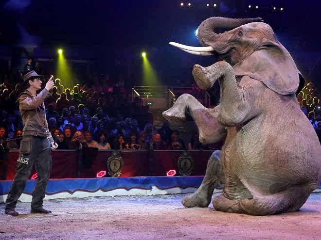 Madrid proíbe circo com animais