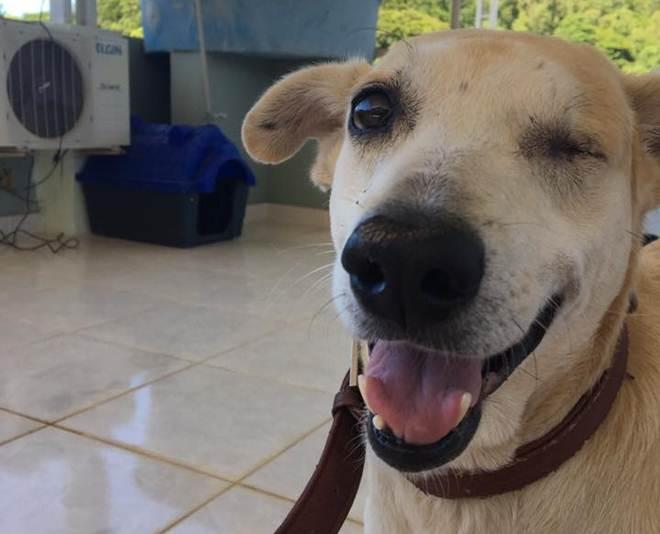 Seis meses após agressões de idosa, cão Ambrósio passa por cirurgia delicada
