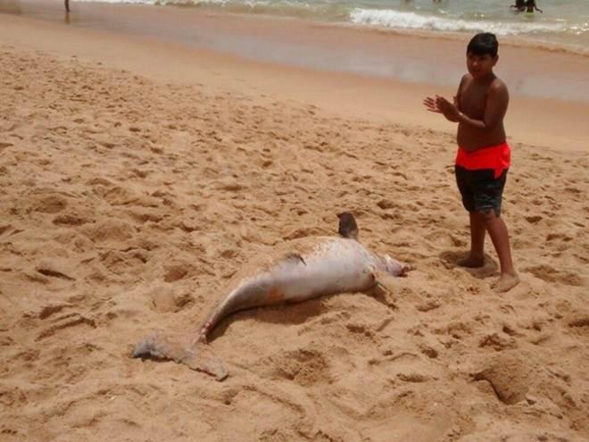 Boto-cinza é encontrado morto em praia de Vila Velha, ES