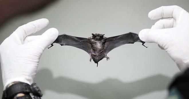 Cães e gatos serão vacinados após morcego ser encontrado com raiva em Vitória, ES