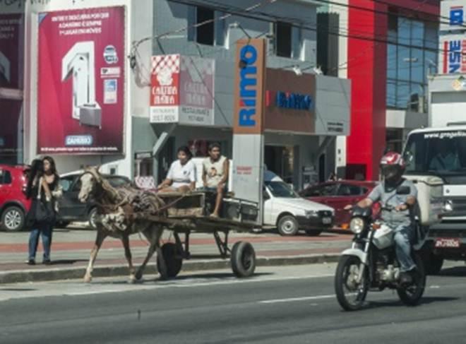 Aprovada lei que proíbe animais de grande porte em cidades capixabas
