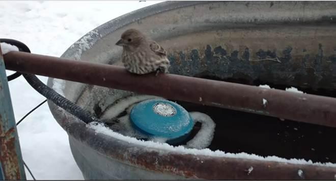 O que este homem fez para resgatar um pardal com as patas congeladas em uma cerca de metal irá tocar o seu coração