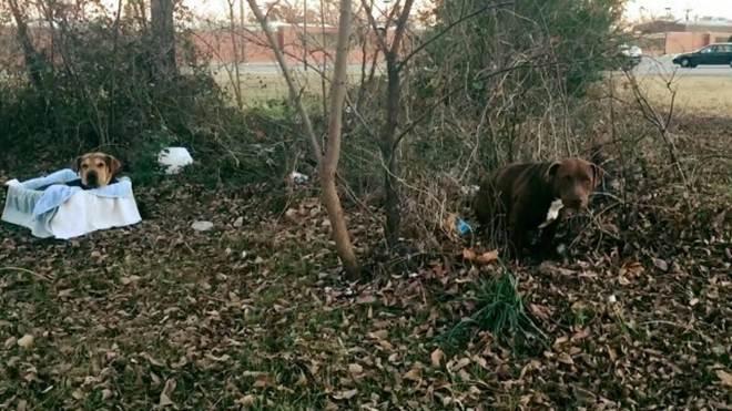 Cachorra se recusa a abandonar 'amigo' ferido em estrada de Nova York, EUA