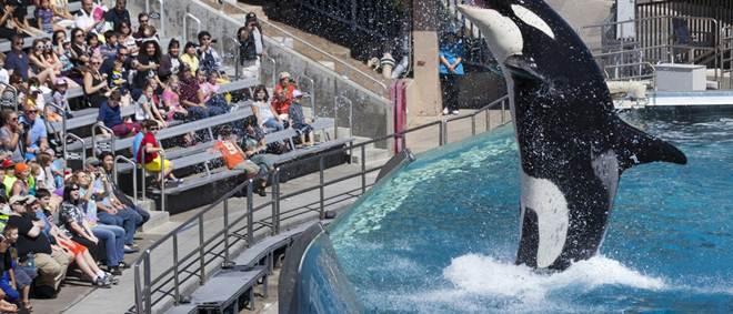 Depois da morte da orca Tilikum, SeaWorld anuncia fim do espetáculo