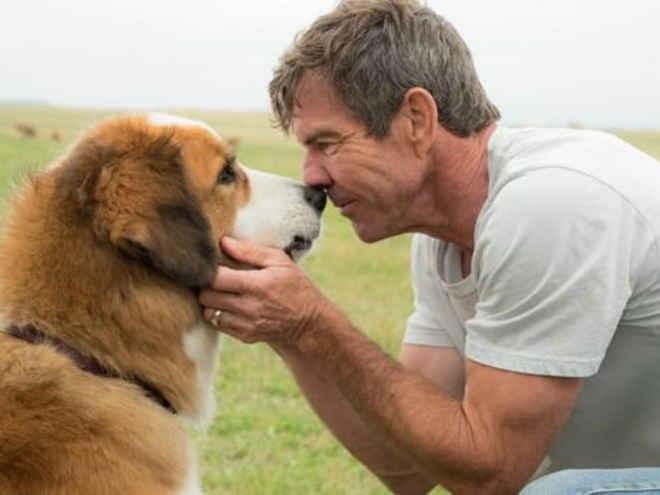 'Quatro Vidas de Um Cachorro' tem pré-estreia cancelada após controvérsia de vídeo