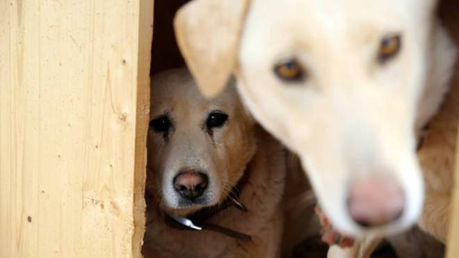 Presidente de ONG de defesa animal é condenada por matar 2.000 cães e gatos