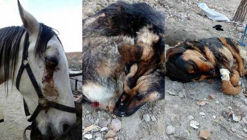 Caçadores matam a tiros cinco cães e arrancam olho de cavalo por serem proibidos de caçar em suas terras