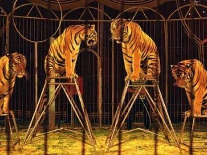 Rejeição aos circos com animais se expande por toda Espanha