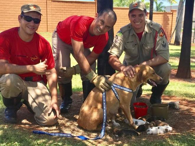 GO: Bombeiros resgatam cadela e sete filhotes presos em bueiro; veja vídeo