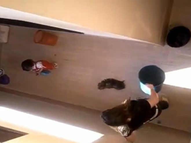 Enfermeira que bateu em yorkshire até a morte é condenada por danos morais coletivos em GO