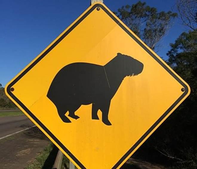 Parceria vai sinalizar rodovias para proteger animais na Chapada dos Veadeiros