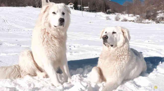 Cães de hotel atingido por avalanche na Itália se salvam