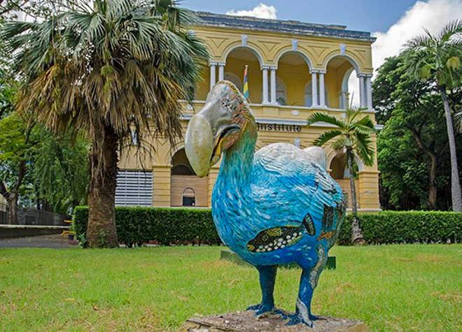 Ilha Maurício carrega memória do dodo, a ave extinta mais carismática do mundo