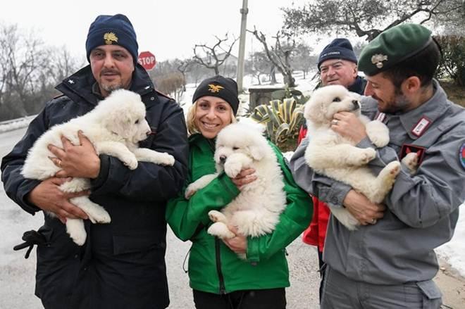 Resgate encontra filhotes de cachorro em hotel soterrado na Itália