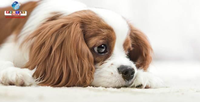 25 mil animais morrem antes de chegar aos pet shops no Japão