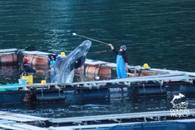 Foto degradante mostra o que pessoas tem feito aos animais marinhos em cativeiro