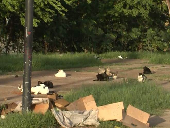 Gatos são encontrados mortos em praça pública no Maranhão