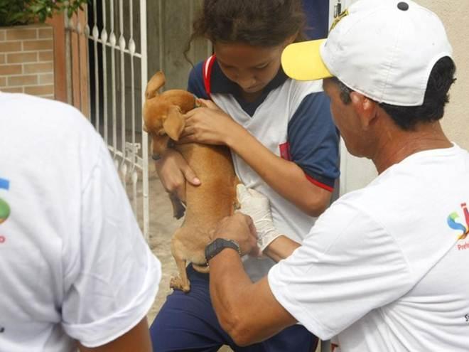 São Luís (MA) vacina 158.982 mil animais contra a raiva e supera meta nacional