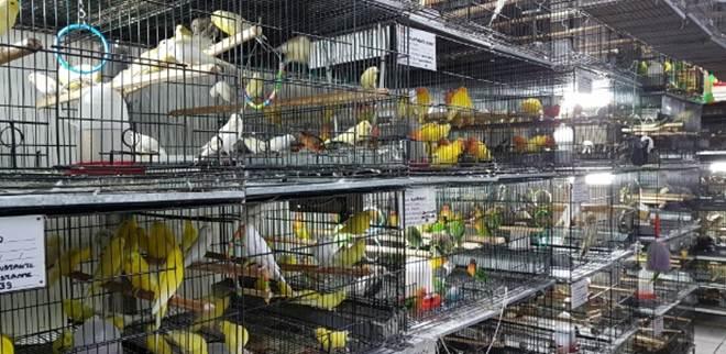 Ação quer proibir venda de animais vivos no Mercado de Belo Horizonte, MG