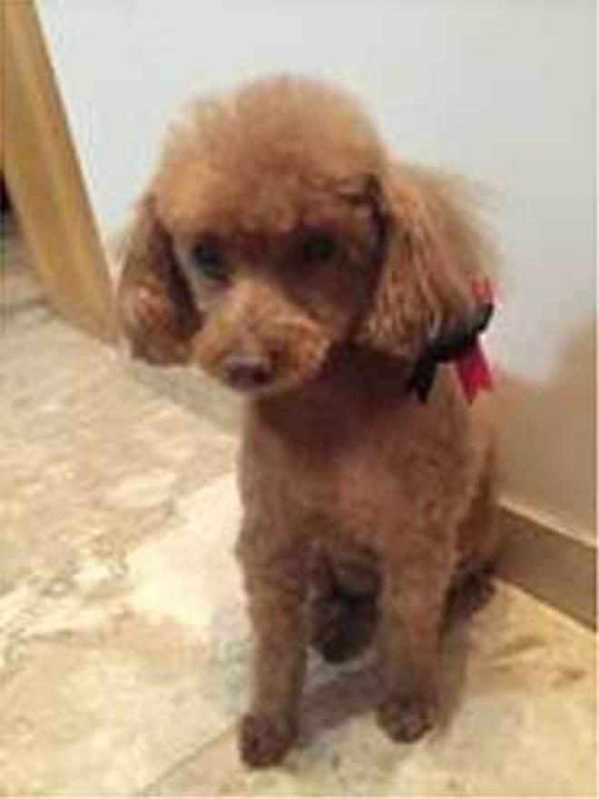 Família recupera cadela sequestrada na porta de drogaria em Belo Horizonte, MG