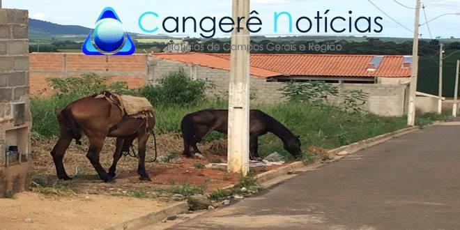 """Homem ameaça fazer cirurgia em égua para """"mostrar quem ele é para os veterinários"""", em Campos Gerais, MG"""