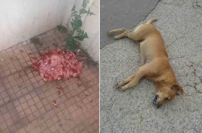 Associação denuncia envenenamento em massa de cães em Capelinha, MG