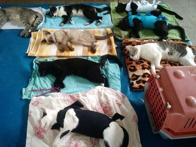 ONG realiza mutirão de castração de animais em Governador Valadares, MG