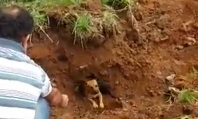 Bombeiros resgatam cinco cachorros presos em manilha de Juiz de Fora, MG