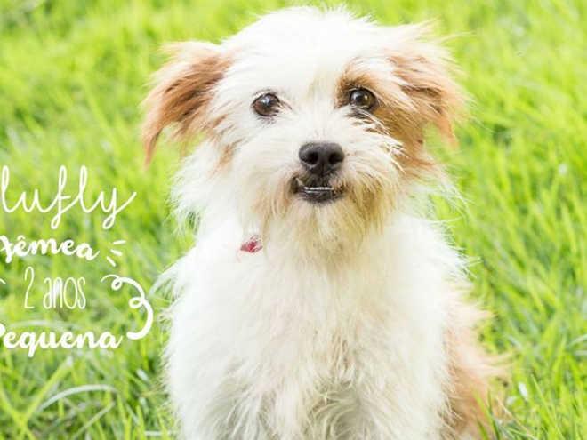 Fotos atraem mais de 50 interessados em adotar cães em Juiz de Fora, MG