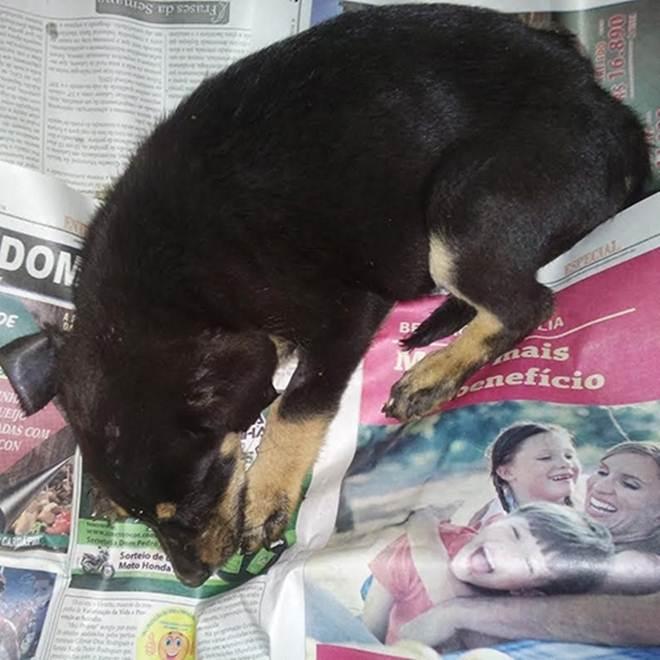 À procura de um tutor, cão precisa de ajuda financeira para tratamento em Lafaiete, MG