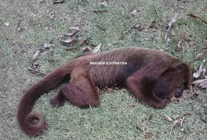 Macacos são encontrados mortos em Manhuaçu, MG