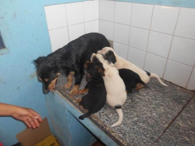 População tem pressa na retirada dos animais das ruas, mas o CCZ de Pará de Minas (MG) continua inabilitado
