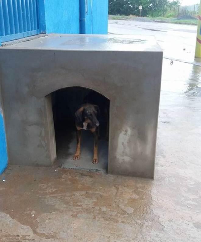 Empresária aproveita escada para construir casa para cachorros de rua em Patos de Minas, MG