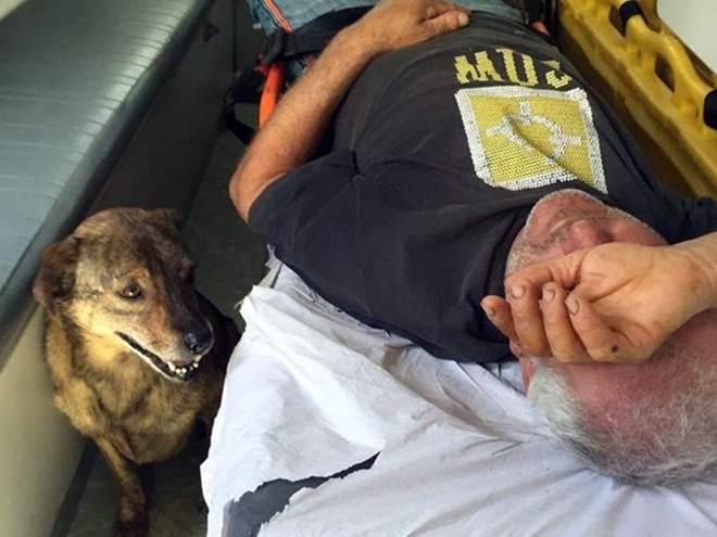 Imagem mostra cachorro ao lado de tutor em ambulância em Poços, MG