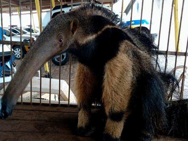 PM divulga balanço sobre resgate de animais silvestres no Triângulo Mineiro