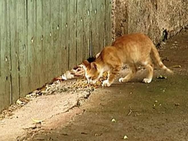 Número de gatos abandonados nas ruas de Uberaba (MG) gera preocupação