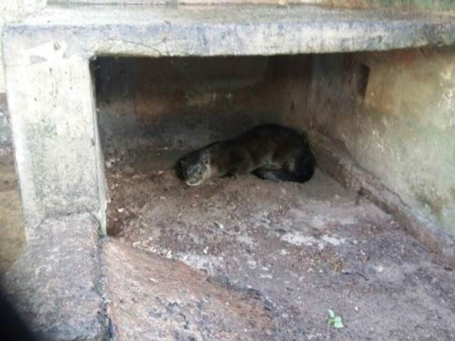 Moradora de Campo Grande (MS) encontra lontra no quintal de casa