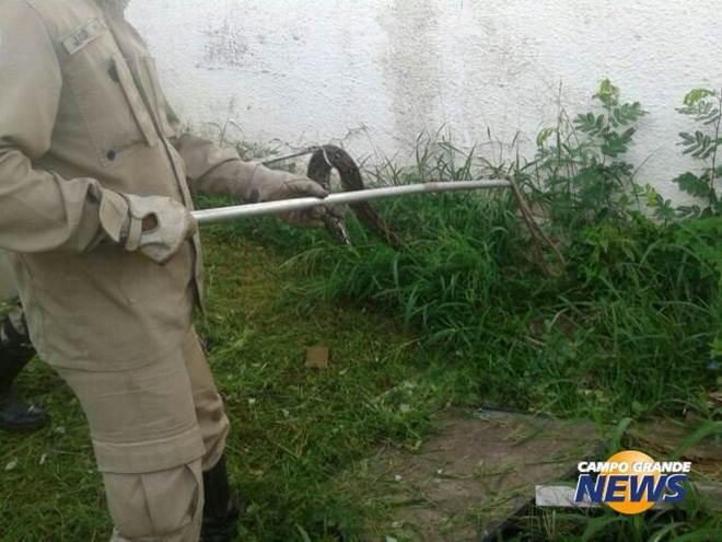 Funcionário encontra duas jiboias em campus de universidade em Corumbá, MS