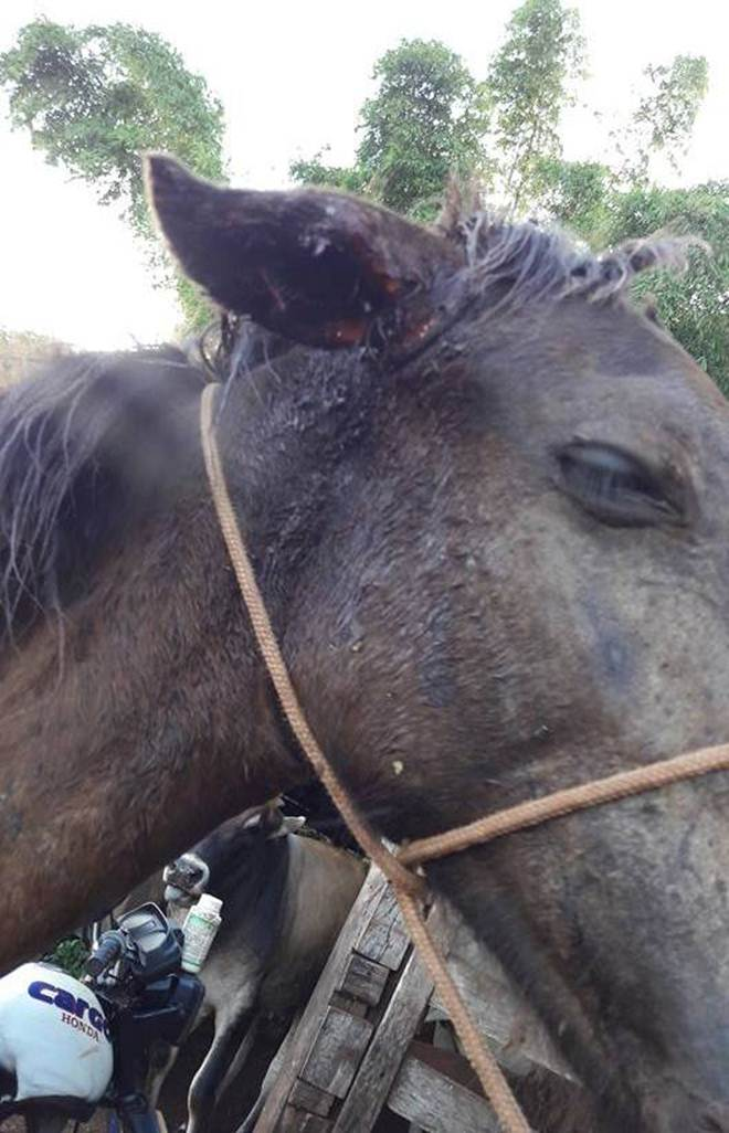 Em rede social, produtor rural denuncia maus-tratos aos animais em Fatima do Sul, MS
