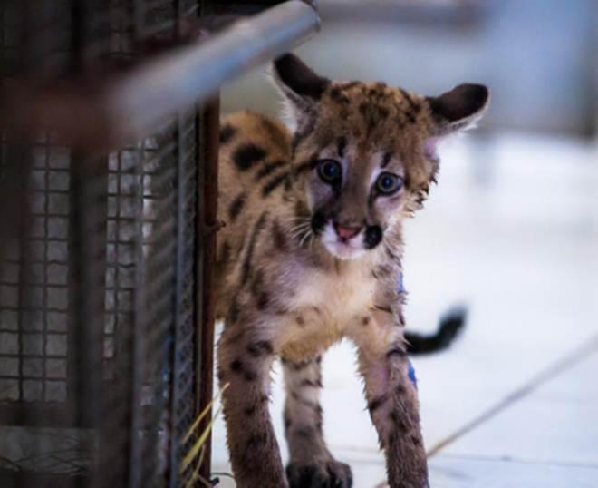 Em 2 anos, Estado de Mato Grosso resgata 1,4 mil animais silvestres