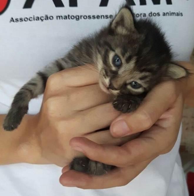 Associação protetora de animais promove bazar para sustentar 68 cachorros, gatos e galinhas em Cuiabá, MT