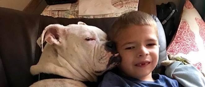 Menino doente e cão surdo têm amizade que emocionou internautas
