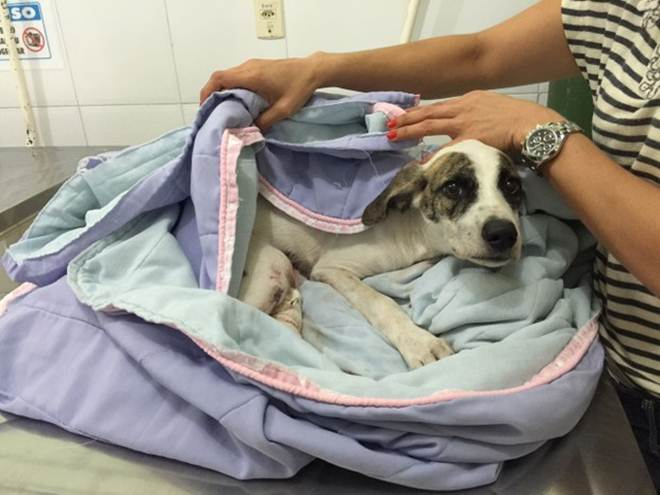 Homem suspeito de arrastar cadela é autuado por maus tratos, em Belém, PA
