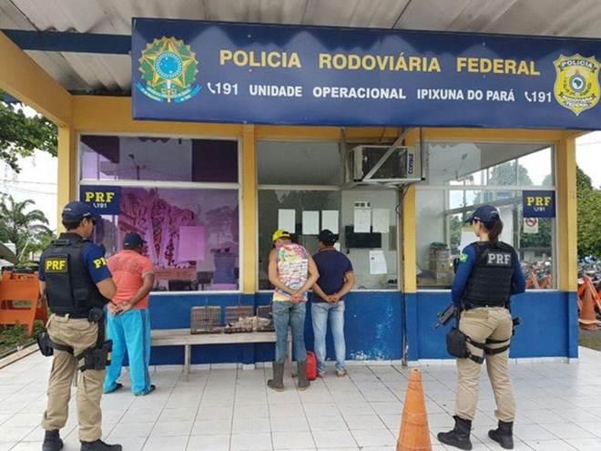 PRF prende três suspeitos de transporte ilegal de animais silvestres no Pará