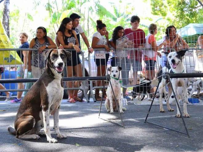 Centro de Zoonoses promove feira de adoção de cães e gatos em Belém, PA