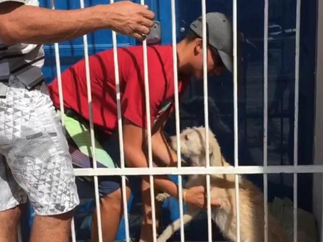 Cachorro preso em grade é resgatado no Centro Histórico de João Pessoa, PB