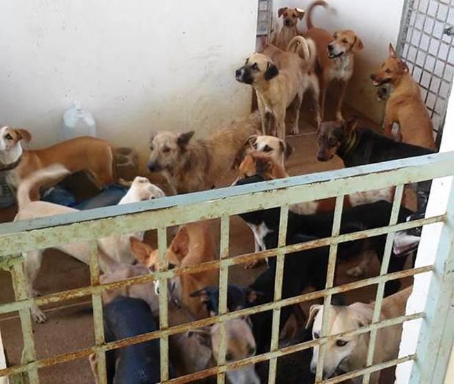 Associação Patoense de Animais enfrenta dificuldades para alimentar cães e gatos