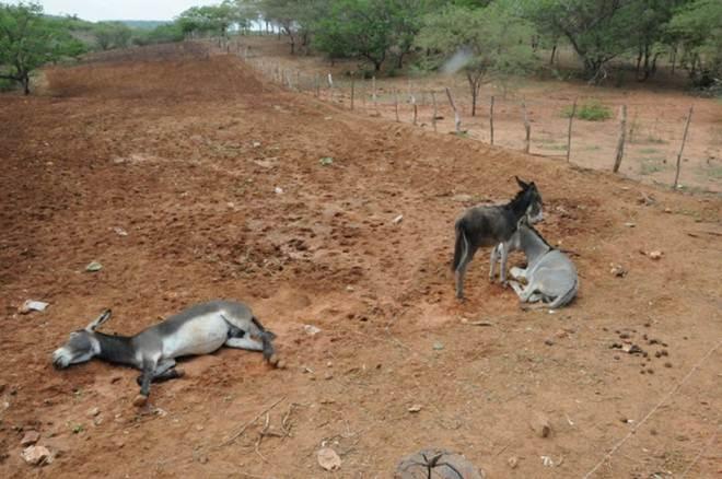 Prefeitura de Araripina (PE) está cometendo maus-tratos a animais recolhidos nas ruas
