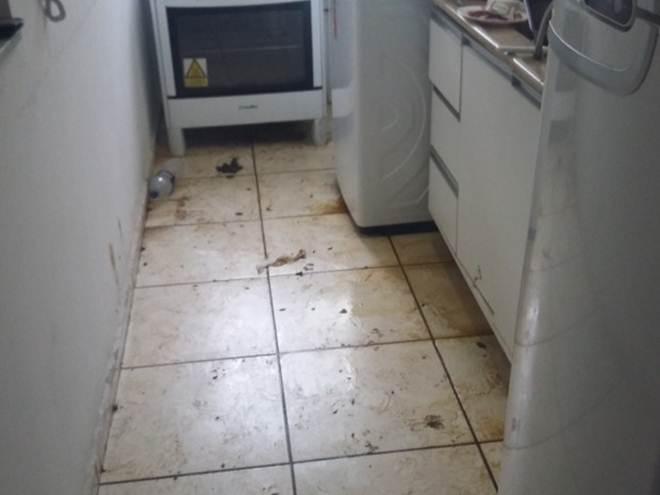 Pit bull é encontrado em lugar com urina e fezes em Caruaru, PE